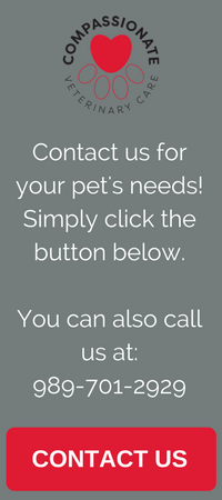 custom veterinary website